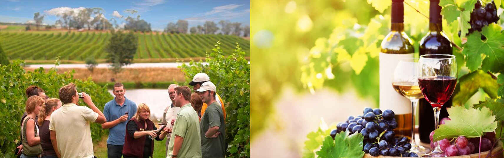 wine-tours-melbourne